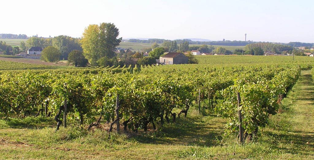 Le domaine à Lignières Sonneville, les parcelles de vignes autour de la distillerie Dudognon